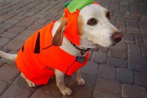 Costume Halloween per cani, gatti e animali domestici